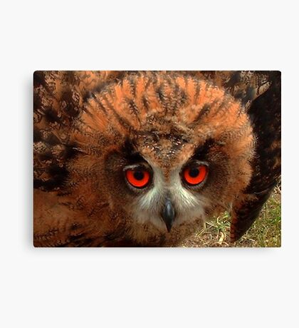 Indy her Eyes Canvas Print