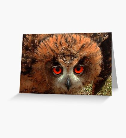 Indy her Eyes Greeting Card