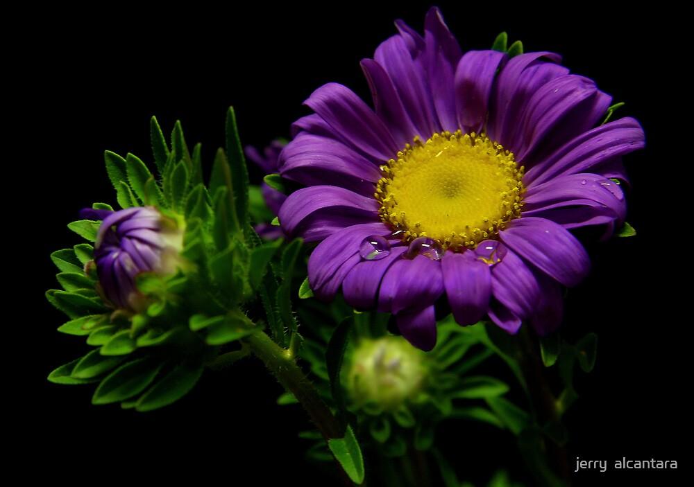 Viola by jerry  alcantara
