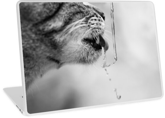 cat drinks water, close-up by PhotoStock-Isra