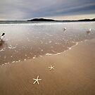 Starfish by Annette Blattman