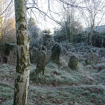 Silver Birch and icy graveyard by chihuahuashower