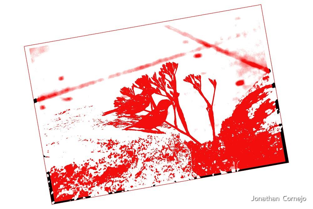 Birds on Red by Jonathan  Cornejo