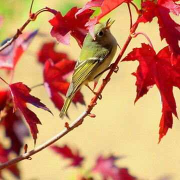 """""""Little Birdy Singing Me A Song"""" by DianaG"""