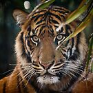 the stare by Lisa Kenny