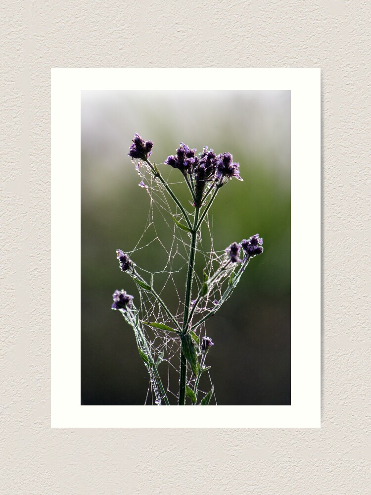 Alternate view of Morning Lace Art Print