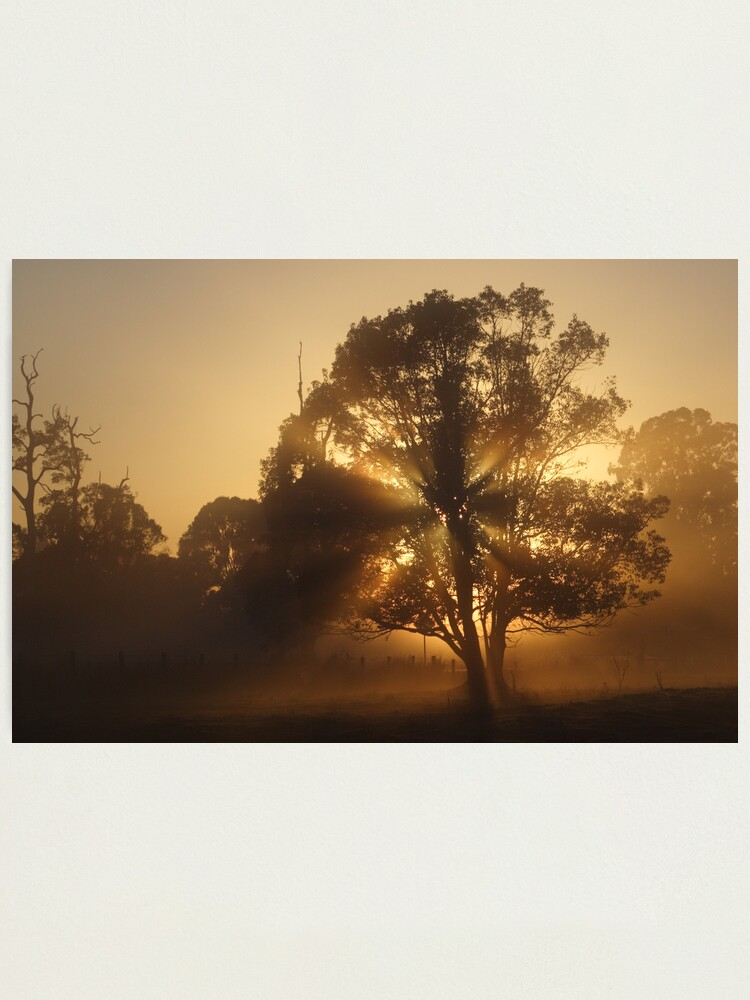 Alternate view of Morning Gold Photographic Print