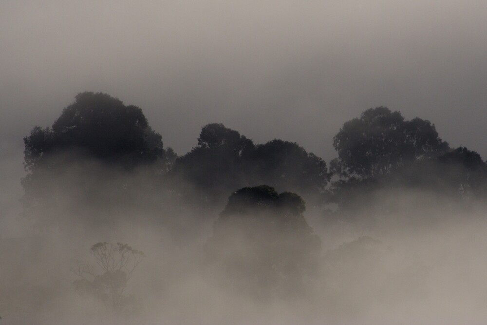 Trees in the Mist by Trevor Farrell