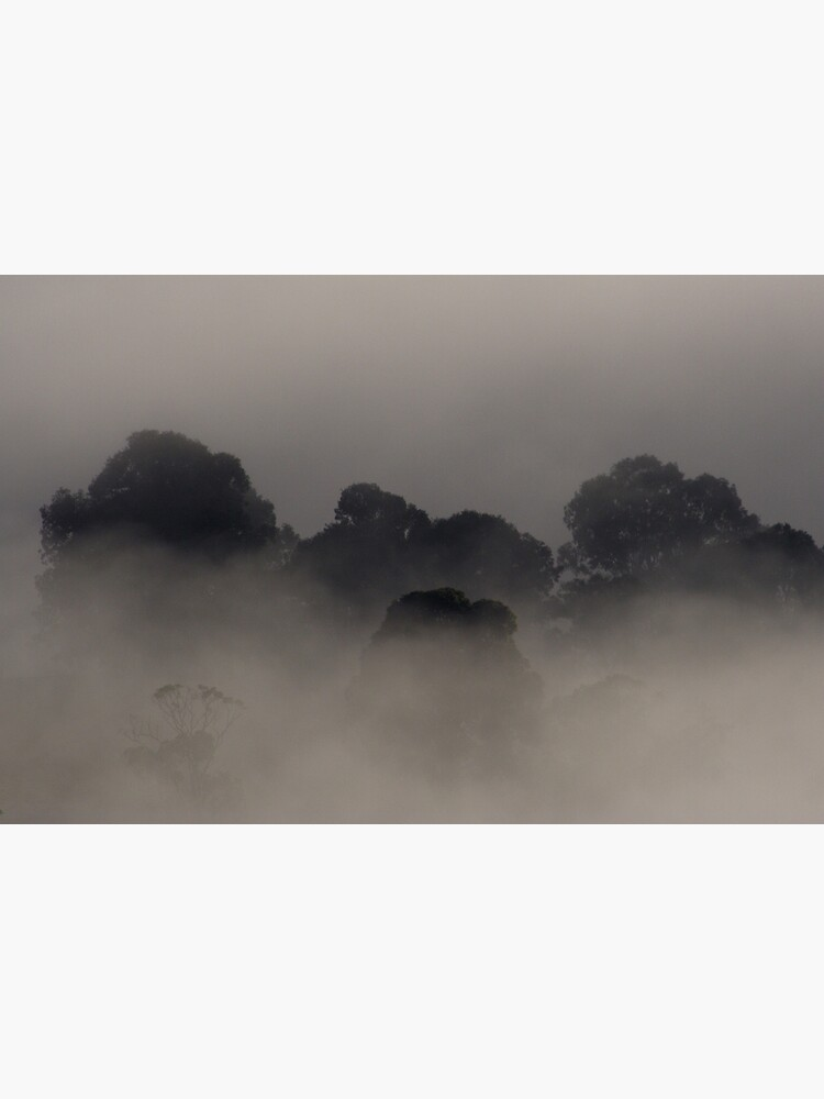 Trees in the Mist by theoddshot