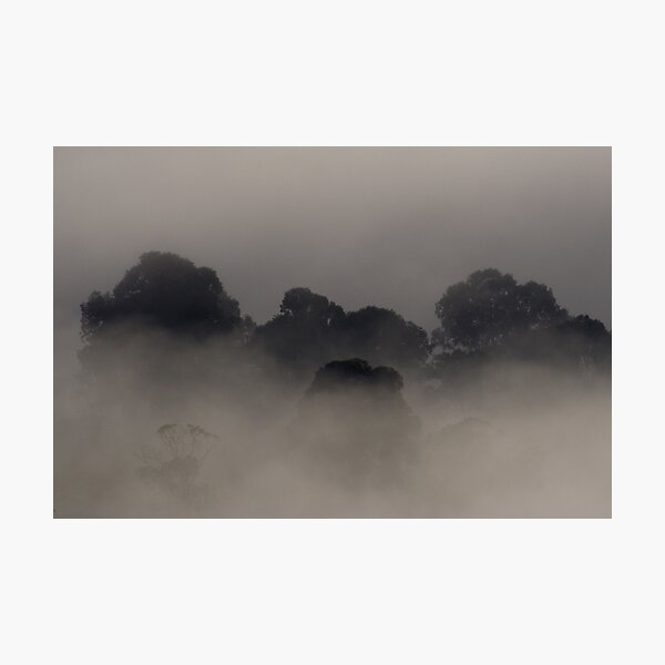 Trees in the Mist Photographic Print