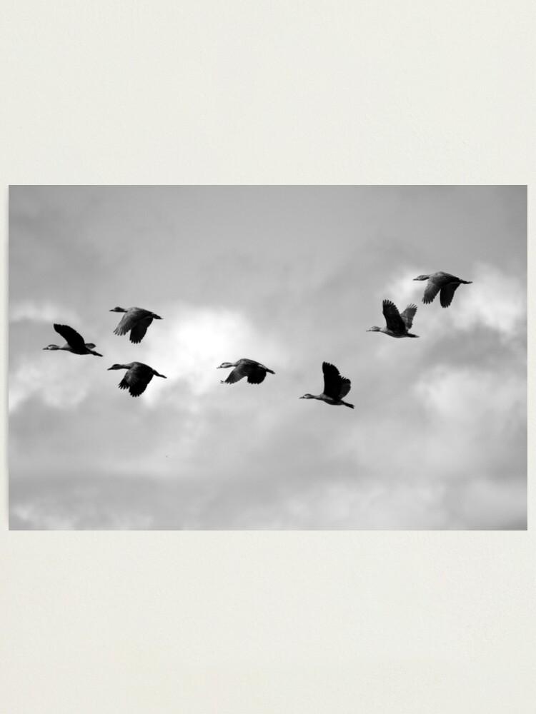 Alternate view of Flight Seven Photographic Print