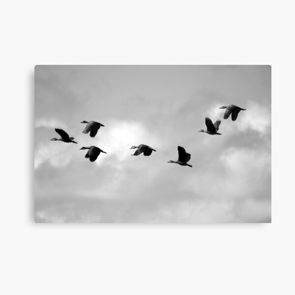 Flight Seven Canvas Print