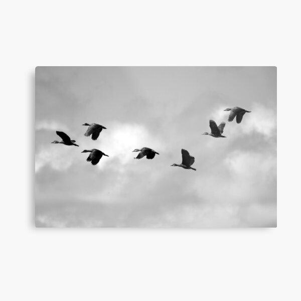 Flight Seven Metal Print