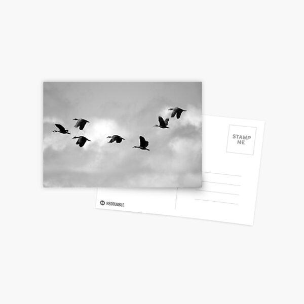 Flight Seven Postcard