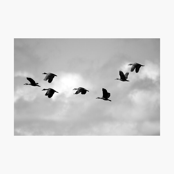 Flight Seven Photographic Print