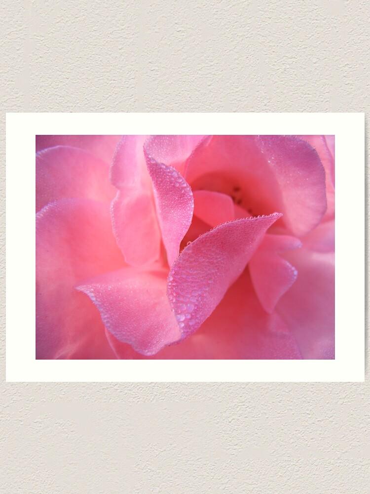 Alternate view of Rose Art Print
