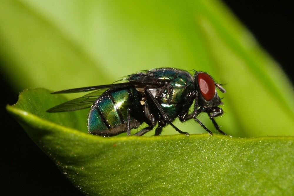 Fly by Trevor Farrell