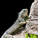 Reptilia by John Velocci