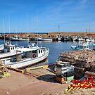 Harbour - Oyster Catchers - Nova Scotia Canada by AnnDixon