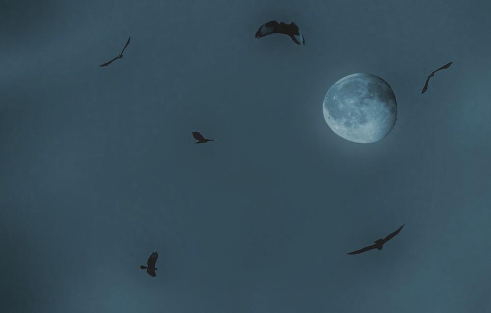 Magic night by claudiu