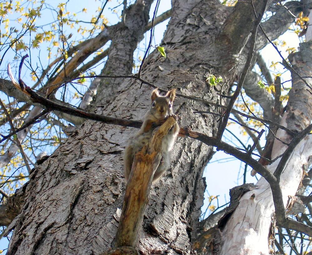 in a tree by JohnYo