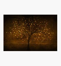 Golden times Photographic Print