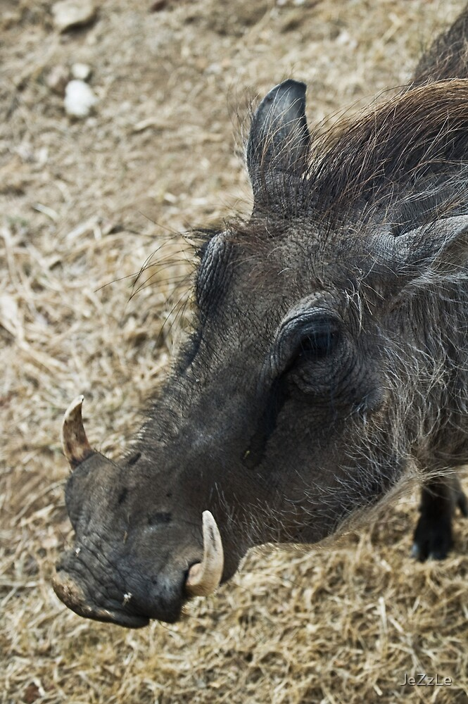 Walter the Warthog by JeZzLe