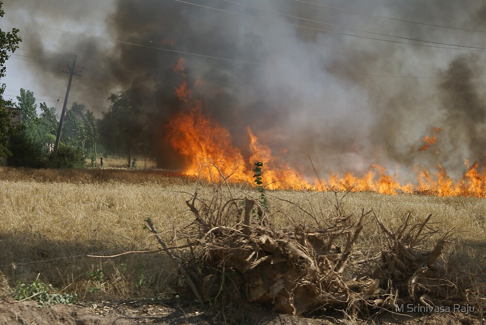 Curse of Fire by M Srinivasa Raju