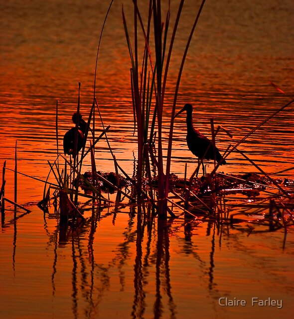 Herdsman Lake. Perth. by Claire  Farley