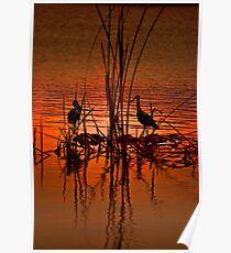 Herdsman Lake. Perth. Poster