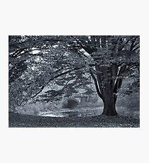 Twin Lake Mist Photographic Print