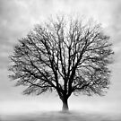 Silent Tree by Imber