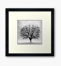 Silent Tree Framed Print