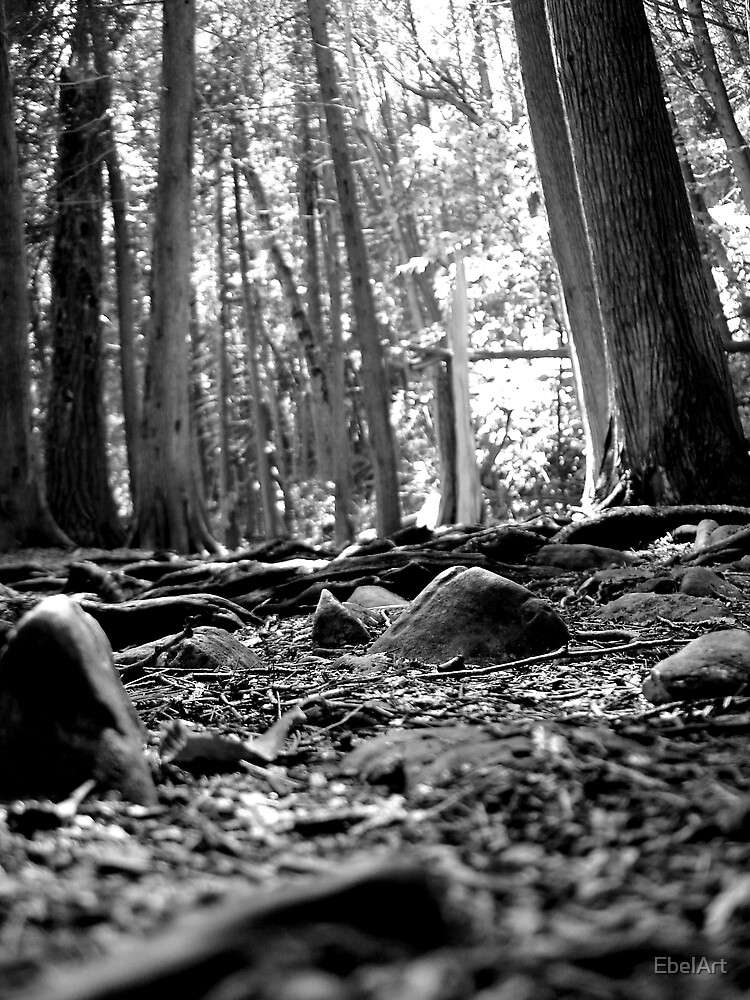 From The Forrest Floor by EbelArt