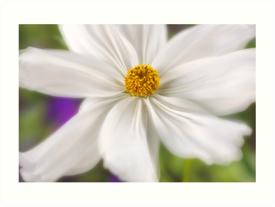 dreamy white flower close-up by PhotoStock-Isra