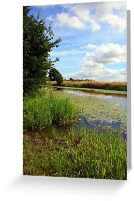 www.lizgarnett.com - Royal Military Canal, Appledore by Liz Garnett