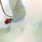 Ladybird on green-blue hydrangea by Ellen van Deelen