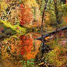 Fairytale Autumn by K D Graves Photography