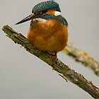 Kingfisher by JMChown