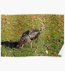 Tom T. Turkey Poster