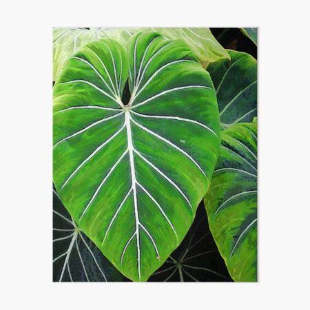 Tropical Leaves, Elephant Ears  Art Board Print