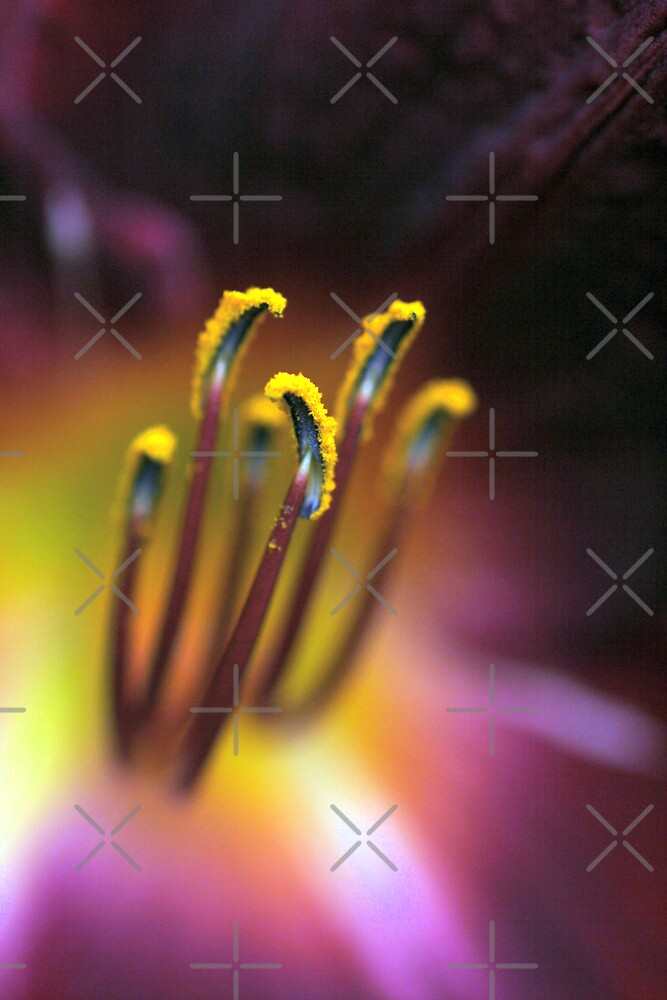 Pollen Explosion  (Day Lily) by mikrin