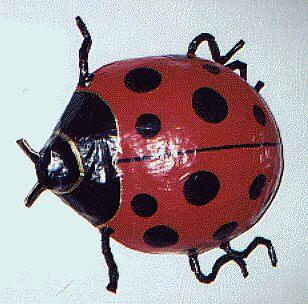 Ladybug by Elizabeth Usanmaz