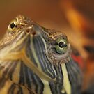 Red Ear Slider by Photography  by Jamye