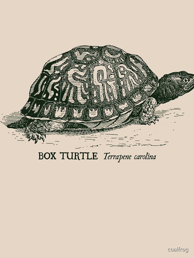 Box Turtle - Vintage scientific illustration by coalfrog