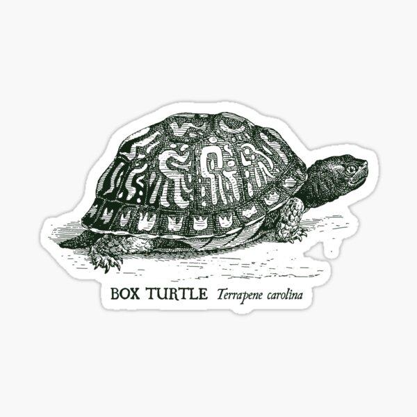 Box Turtle - Vintage scientific illustration Sticker