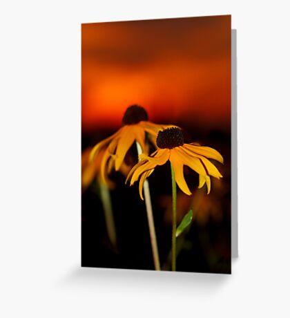 Susan's Sunset Greeting Card
