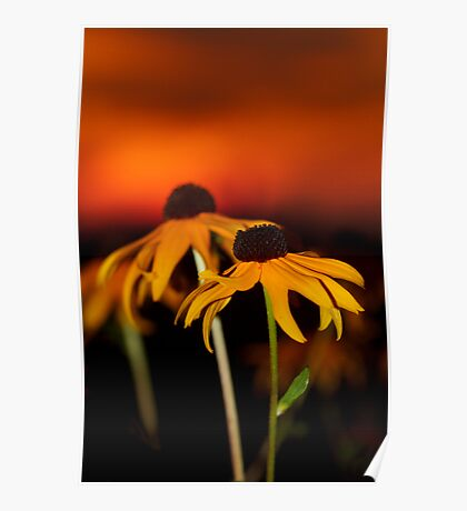 Susan's Sunset Poster