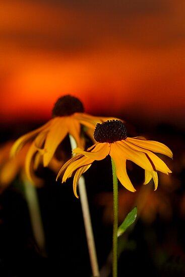 Susan's Sunset by Renee Dawson