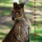 Kangaroo - Quindalup Fauna Park by Coralie Plozza